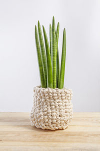 Sansevieria in wicker basket